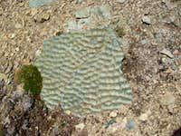 Geologic evidence: ripples