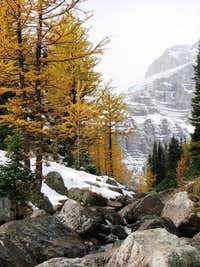 Larches and Eiffel Peak