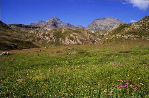 Pasture under the Mont Glacier