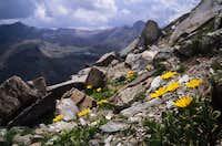 Yellow Flowers among stones