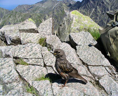 A climbing companion