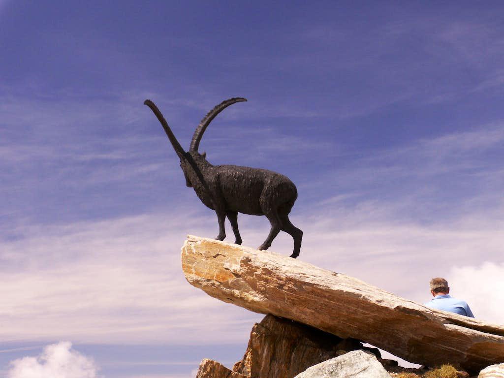 An ibex...