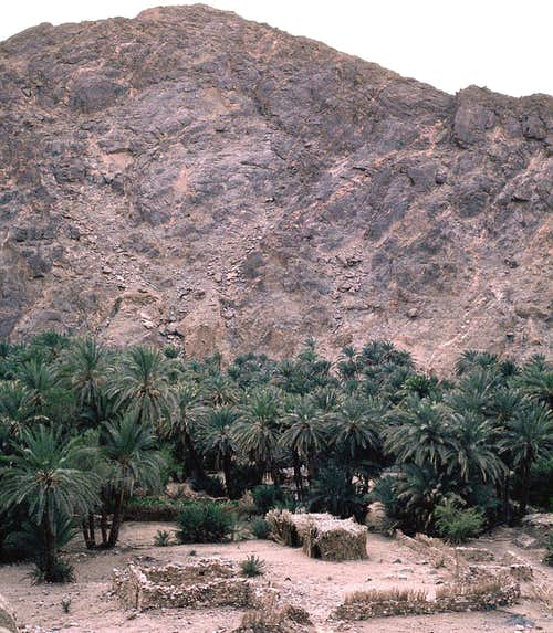 Oasis in the Sinai Desert