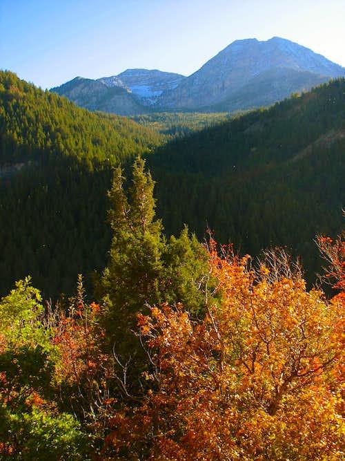 North Timpanogos Fall Colors