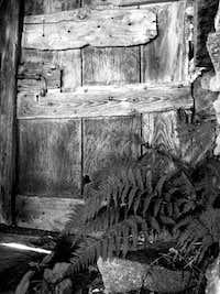 Door and Fern