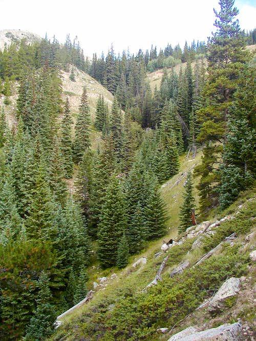 Creek  valley along side trail