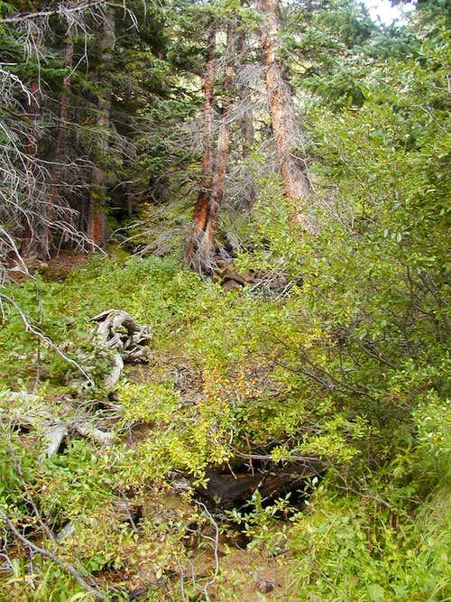 Woods along trail