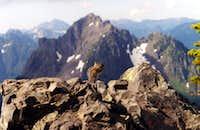 Chipmunk on Mount Ellinor