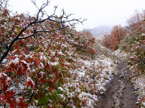 October snow on the Georges Hollow trail