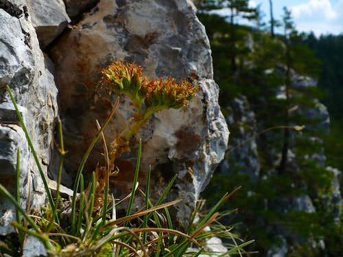 On summit rocks of Matka Bozia