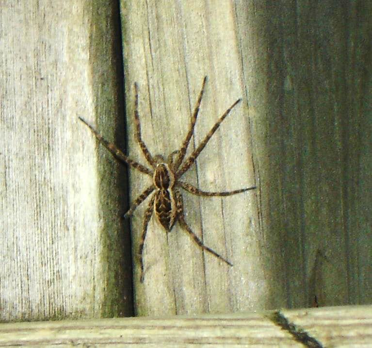 Bridge Spider Ryker Lake