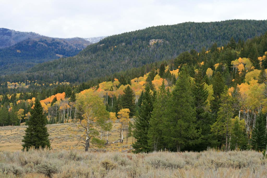 Fall Color in Slough Creek