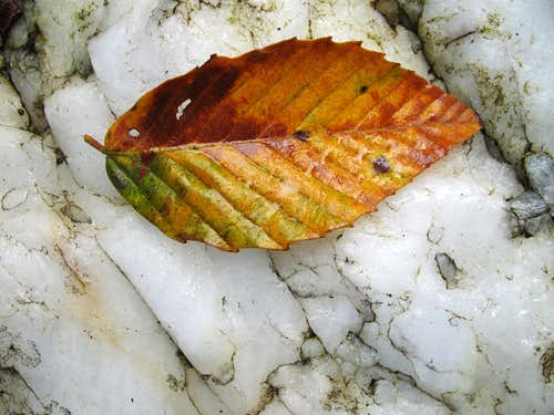 Quartzite and Leaf