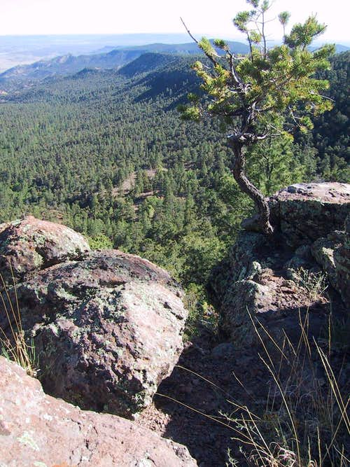 On the flanks of Mt. Taylor