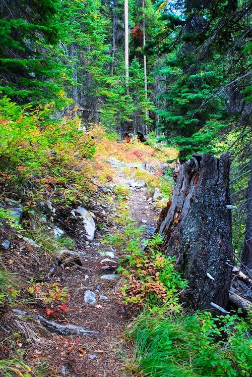 Chaffin Creek Trail