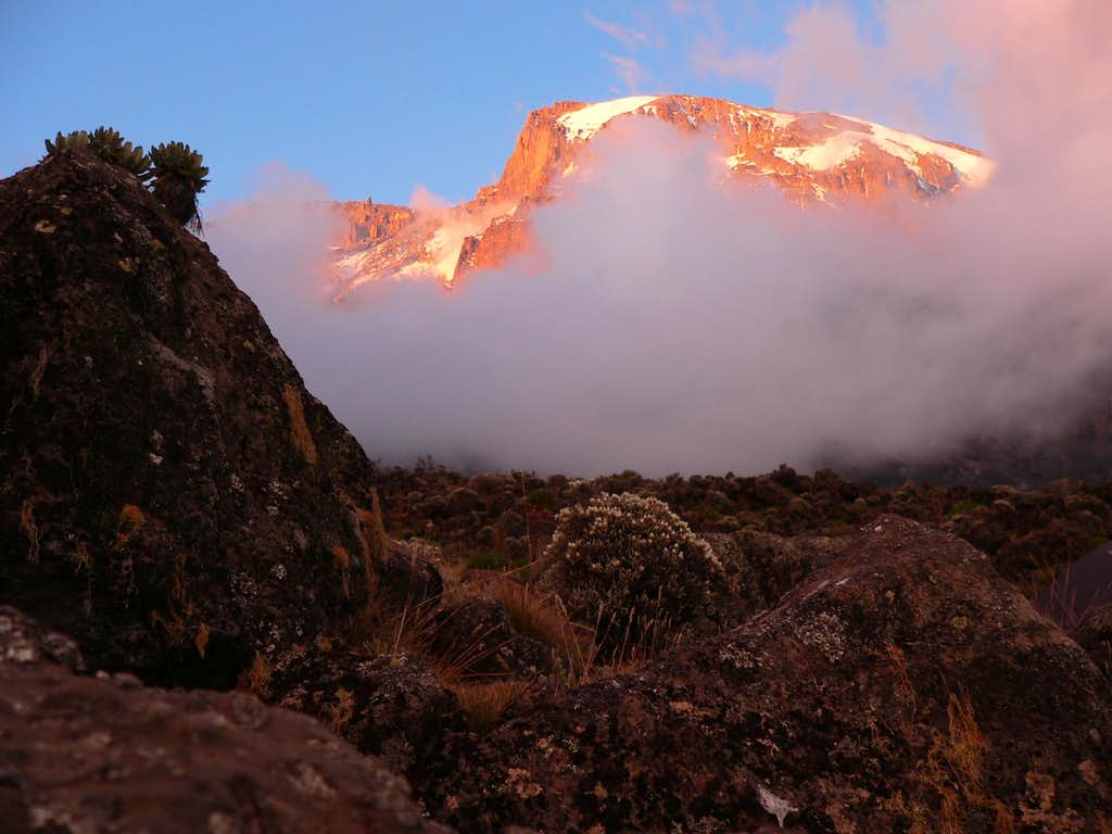 Kili view from Barranco camp