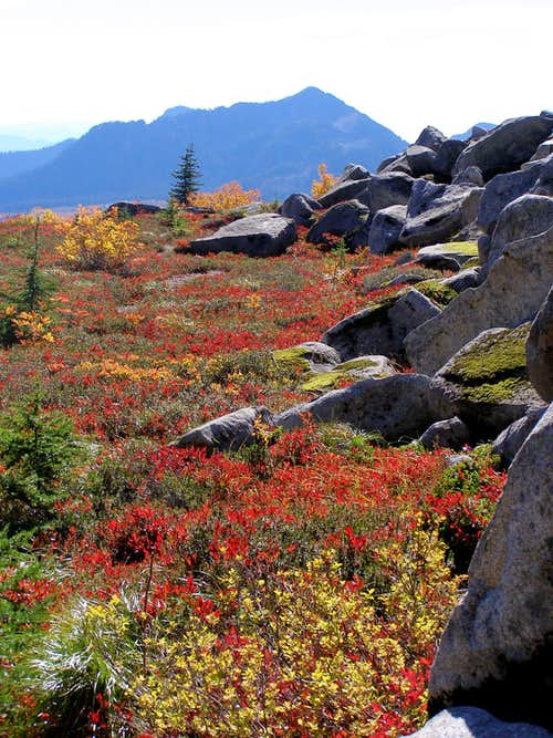 Granite Mountain Meadow