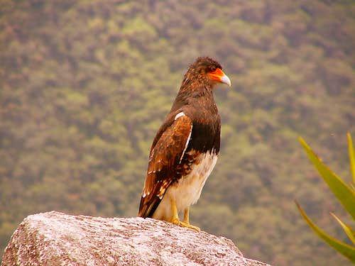 Machu Picchu's wildlife.
