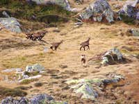 Retezat Wildlife