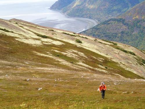 Tundra and the Turnagain Arm