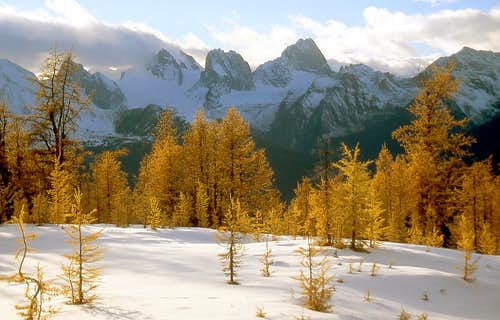 Bugaboo Larches