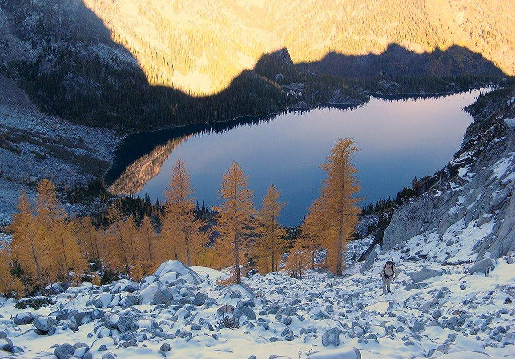 Golden Larches on the