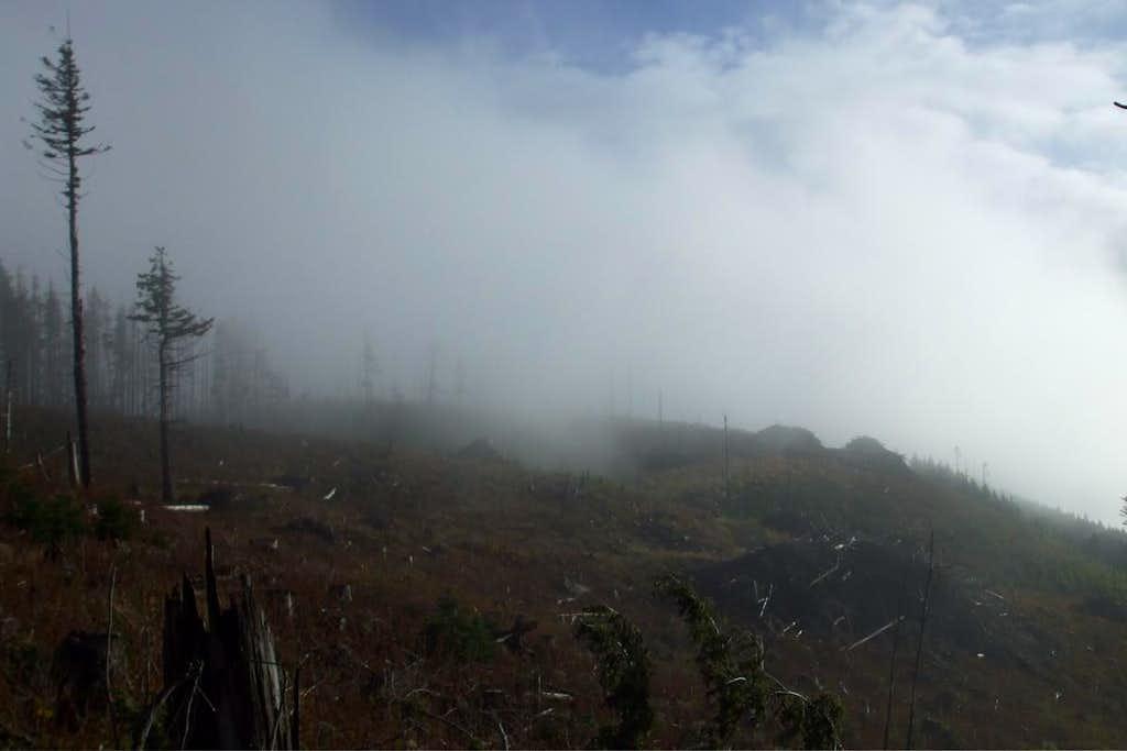 Clearcut on summit area
