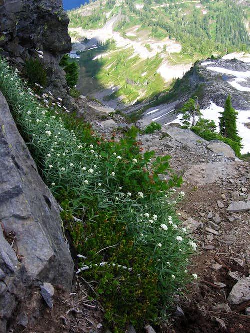 Wildflowers on Table Mountain (near Mount Baker)