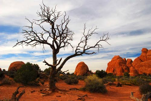 Dead Tree and Sandstone