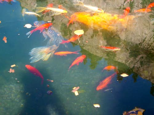 Fish pond in the Rockies