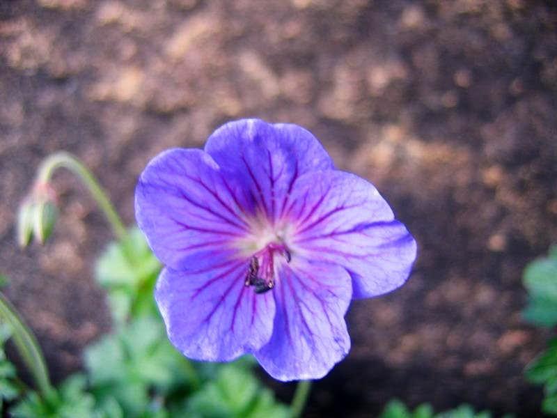 High Altitude Flower