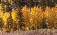Fall colors at the Piute Pass...
