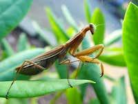 I'm Mr. Mantis...