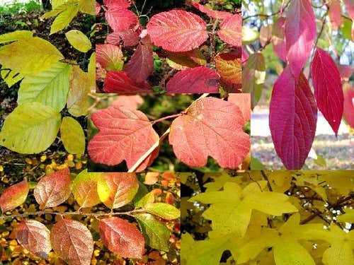 A compilation of autumn leaves