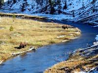 Riverside Bison