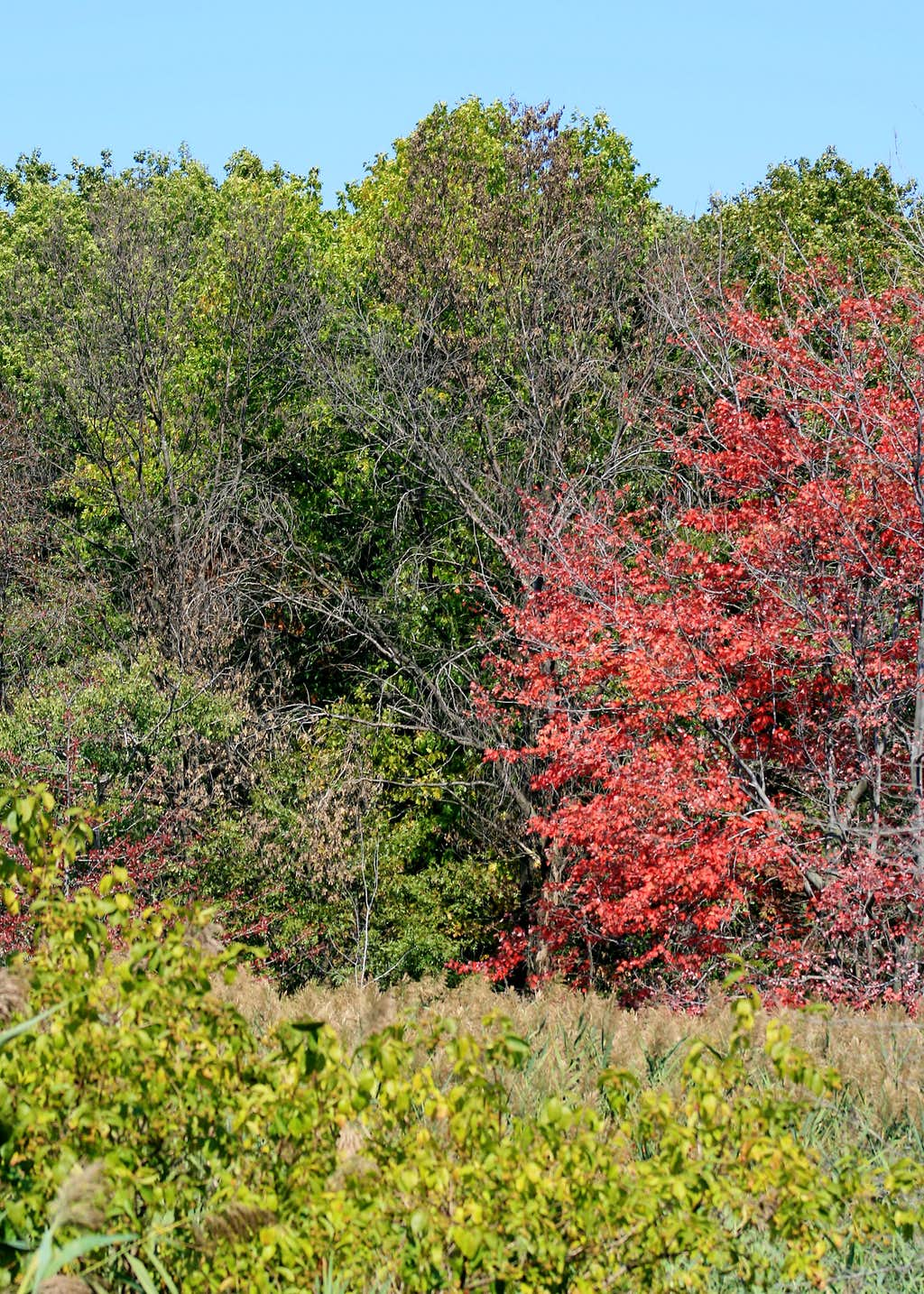 Fall Arrives in the Great Marsh