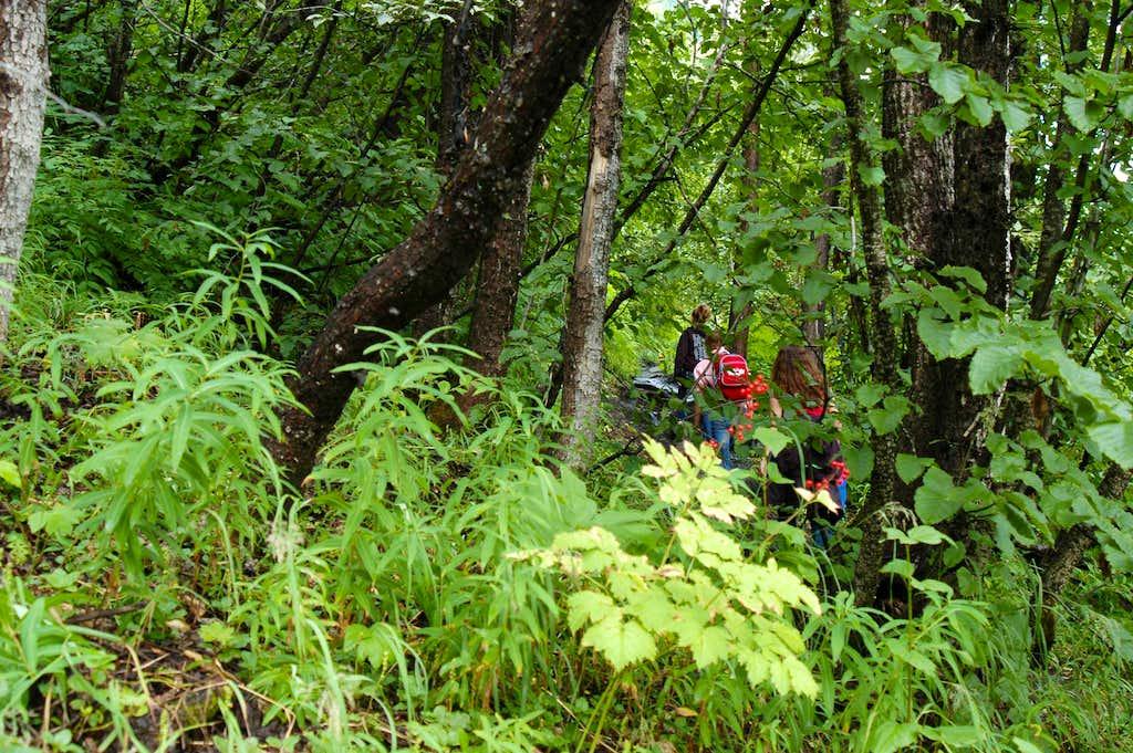 Lower Exit Glacier Trail