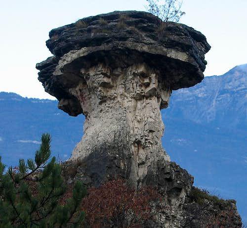 Albaredo Mushroom