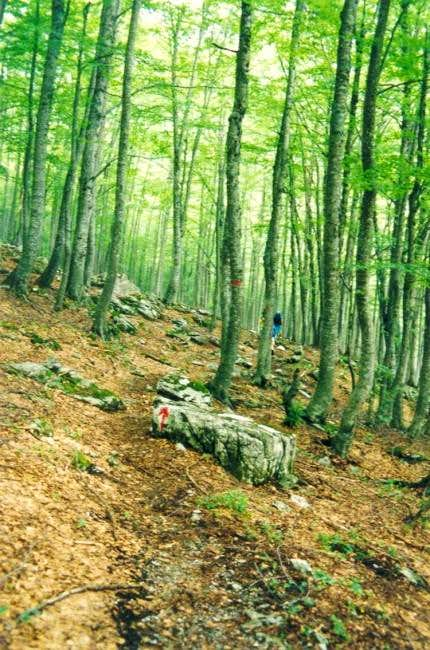 The trail from Diastavrosi to...
