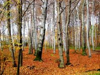 Low Beskid Forest in November