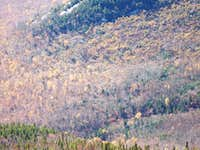 Blowdown on Rocky Peak Ridge