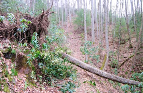 Pisgah Forest Blowdown