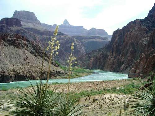 Yuccas fram the Colorado...