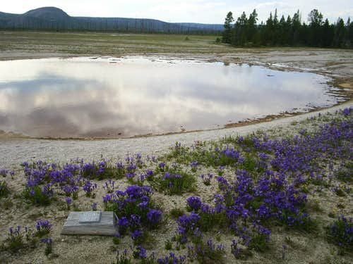 Thermal pool with wildflowers