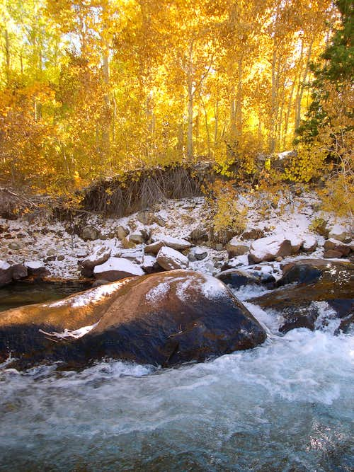 Autumn along Bishop Creek