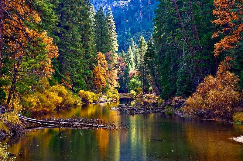 Yosemite - Merced  River in Fall Color