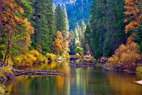 Yosemite - Merced  River in Fall Color