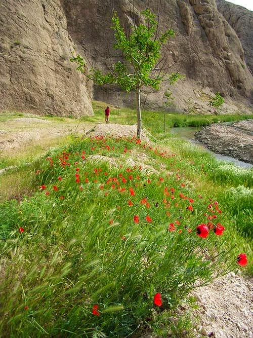 Akhlamad's flora