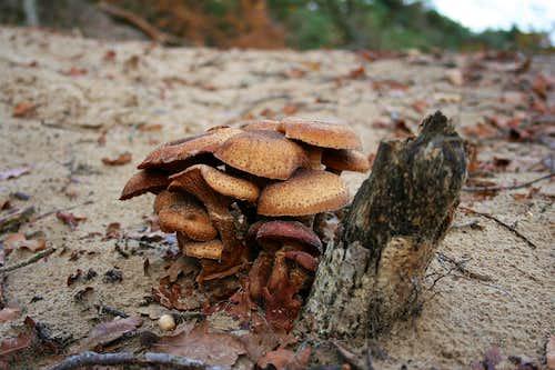 Mushrooms in the dunes