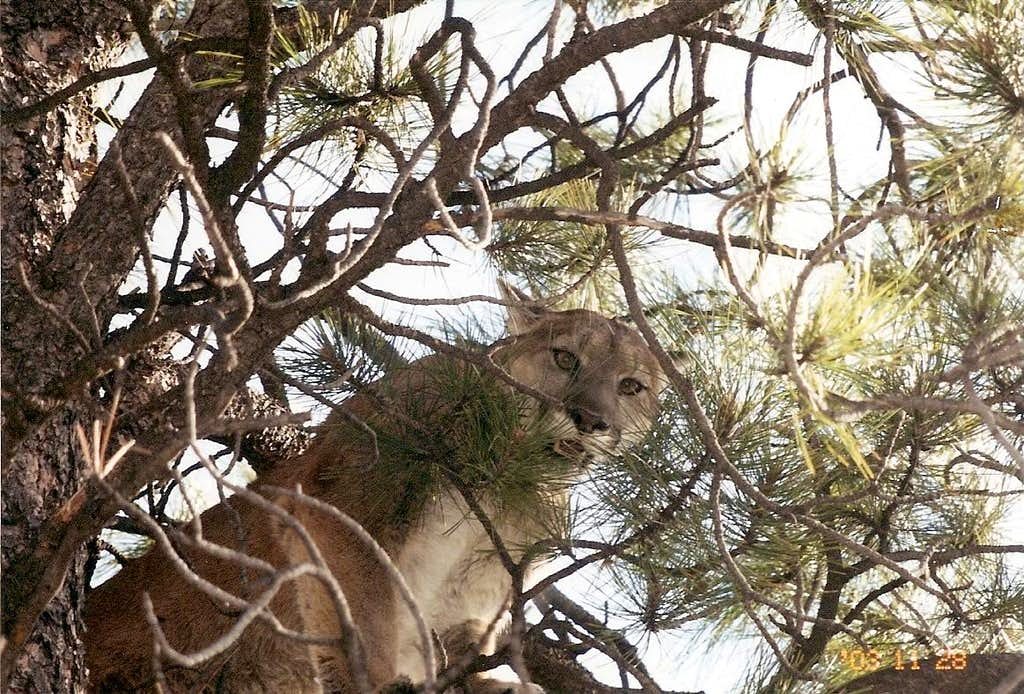 Animals of the Western slope of Colorado